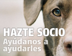 Hazte socio