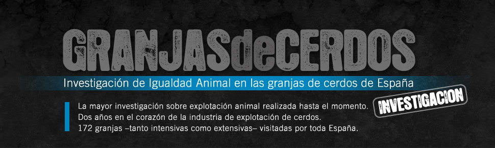 Granjas de Cerdos | Una investigaci&oacute;n de Igualdad Animal