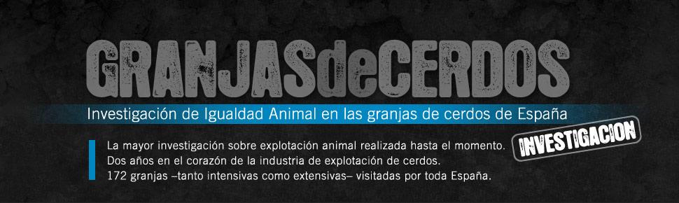 Granjas de Cerdos | Una investigación de Igualdad Animal